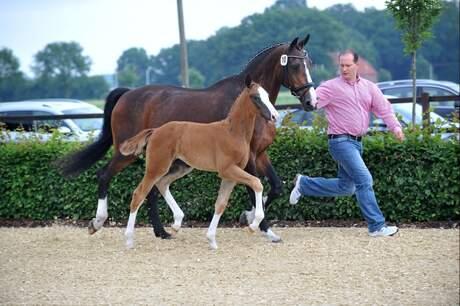 Foal Championship 2012