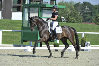 Warendorf: Dante's Hit will participate in the second WC-inspection
