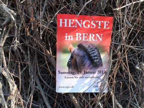 Hengstschau Bern 2013