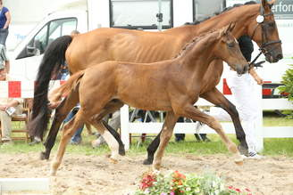 Riedlingen: For Romance I OLD presents two top price foals