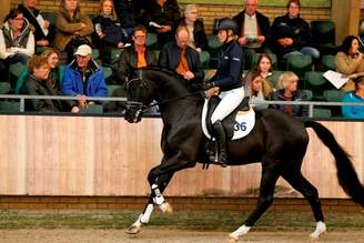 Ermelo/NLD: For Ferrero Wins Stallion Performance Test