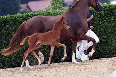Foal Registration 2015