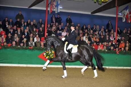 stallion show Vechta 2012