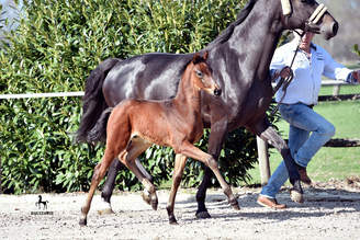 Impressive first foals of our La Vie