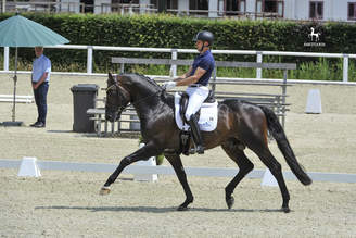 Warendorf: Meggle's Fidelio Royal will travel to the WC