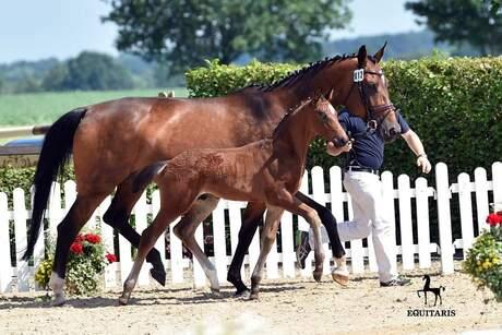 Foal Show 2016