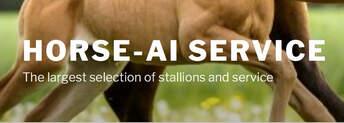 Horse-AI Service/BEL