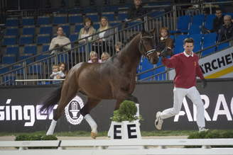 Stuttgart: Young stallion by For Romance I OLD