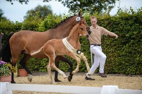 LVM Foal Championship 2014