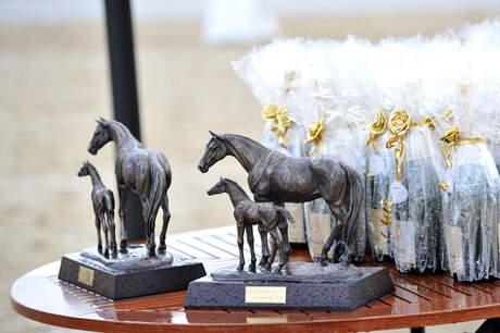 LVM Foal Championship 2015