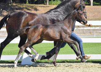 Vechta: Full-brother of Dante moves to DLZ