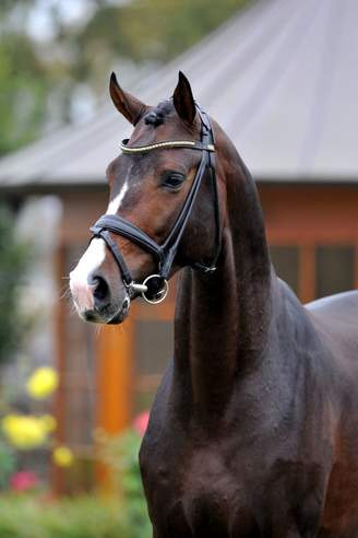 Münster-Handorf: For Romance I OLD and Rock For Me Send Auction Horses