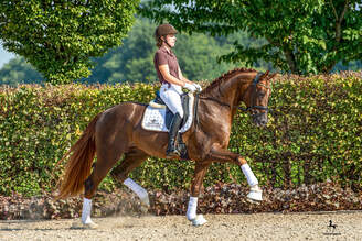 Schlieckau: Bellany impressed at his SPT and was accepted by Hanoverian Association
