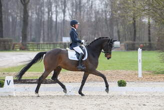 Muenster: Winning show debut for Only Follow Me FE