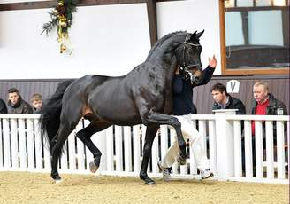 Rubin-Royal OLD Third in the WBFSH Sire Ranking