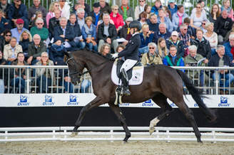 Warendorf: Dark Diamond HM Zweite