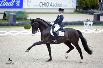 Vodskov/DEN: Dante Weltino OLD-son moves to Helgstrand Dressage