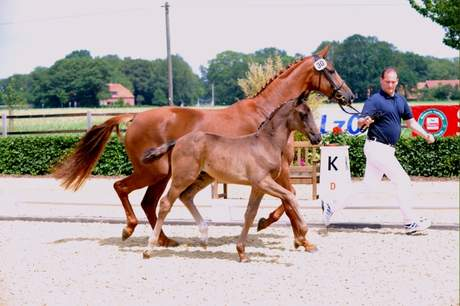 Foal Championship 2011