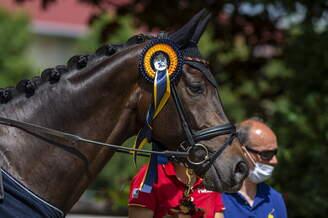 Olivia/ESP: Team-Gold for Clara Paschertz and Danubio OLD