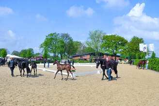 Foal show - spectators admitted